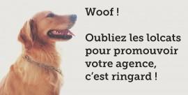 Un chien heureux de travail en agence web à Bordeaux